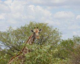 Etosha National Park – Wildlife pur!