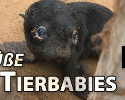 Süße Tierbabies und Meer in Afrika [VLOG #3]