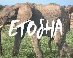 Safari im Etosha National Park 2017 [VLOG #4]