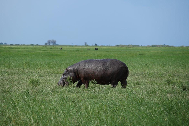Safari-Time: Auf zum Chobe National Park